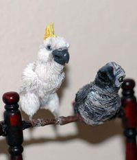 Sallybirds